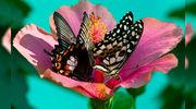 Высоко доходный  бизнес ферма Живых Восхитительных Бабочек  из Филиппин