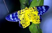 Высоко прпбыльный бизнес ферма Живых Тропических Бабочек  из Южной Америки